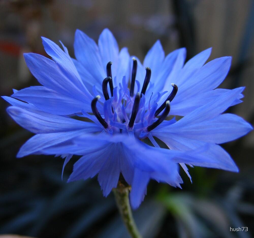 Blue by hush73