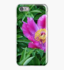 Pink And Purple Macro Flower iPhone Case/Skin