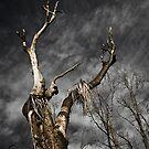 Wooden Reaper by Aaron  Sheehan