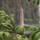 Shore Pine by John  Kapusta