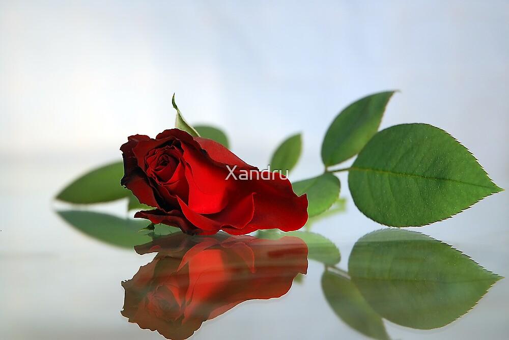 Tender Reflections by Xandru
