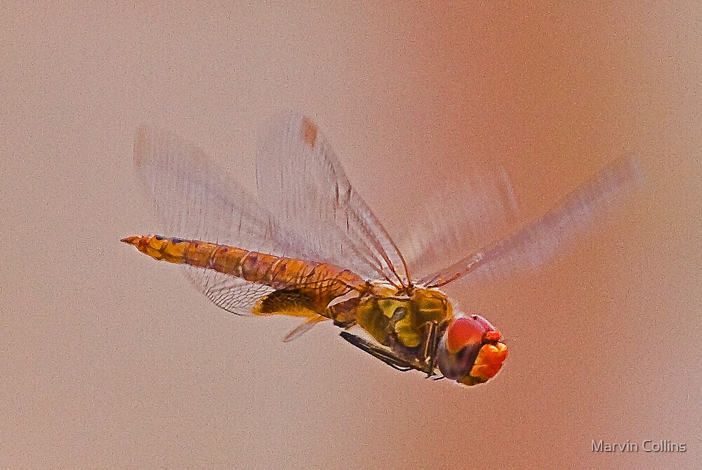 Green Dragonfly In Flight by Marvin Collins