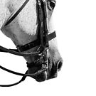 Double Bridle - Dressage Series by Michelle Wrighton