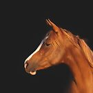 Soulful Gaze of a Horse by Michelle Wrighton