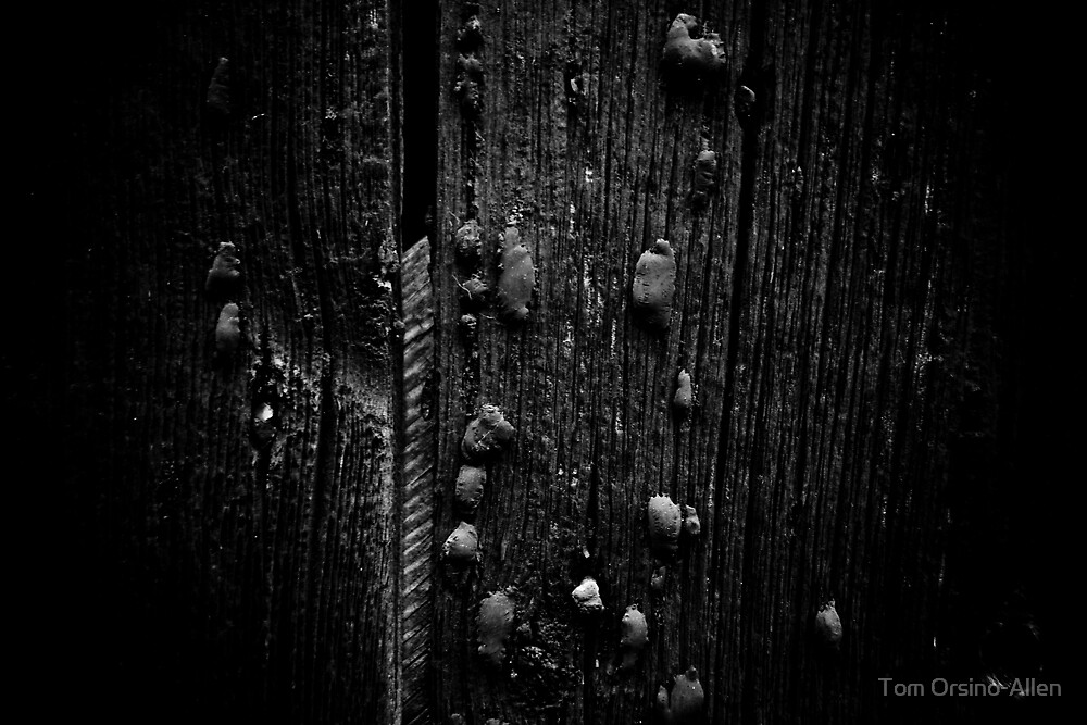 Wood and Tar by Tom Allen