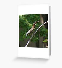 Tri Color Heron Greeting Card