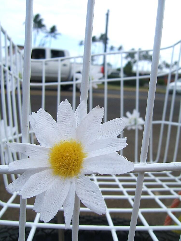 Daisy by Diana Forgione