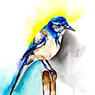 Western Scrubjay  by Michelle Potter