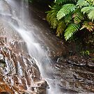 Cascading - Lyrebirds Dell by Dilshara Hill