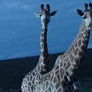 Giraffe by Ila80