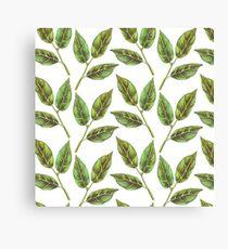 Bay leaf Canvas Print