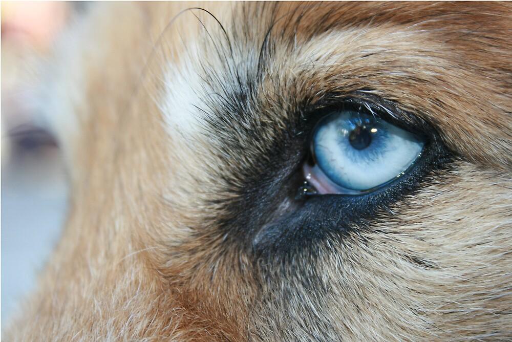 The Bluest Eye by Yuann Wang