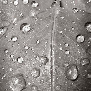 dew by Maggierda
