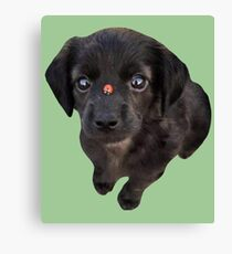 Puppies and Ladybugs Canvas Print