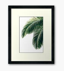 Tropical Palm Leaves Framed Print