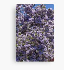 Purple Broom #2 Canvas Print