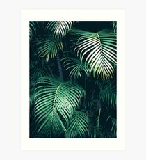 Tropical Palm Leaves Art Print