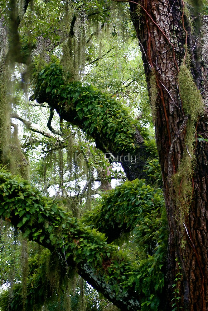 The Trees Dance by Kate Purdy