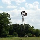 A Hot Day In Texas by Glenna Walker