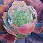 succulent by Karin Zeller