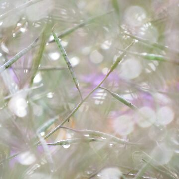 Endless Dew by KlausTonitz