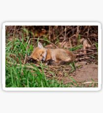 Fox Kit 9 Sticker