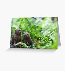 Pair of pygmy monkeys Greeting Card