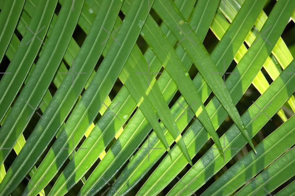 THE PALM CURTAIN by Magriet Meintjes