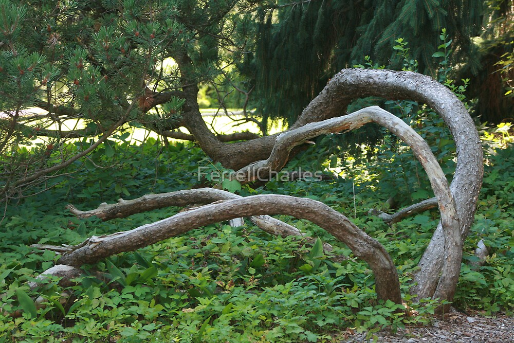 Bending Upward by FerrellCharles