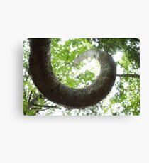 Spiral Treet Canvas Print