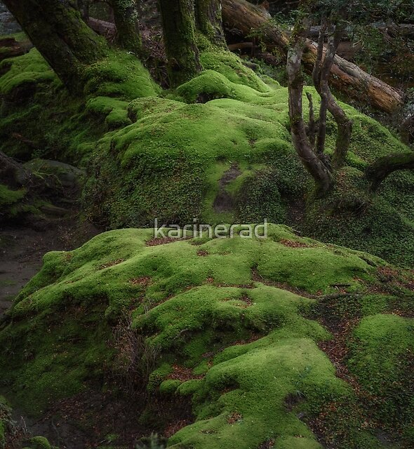 Enchanted Forest by Karine Radcliffe