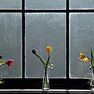 Flowers on a window ledge. by Billlee