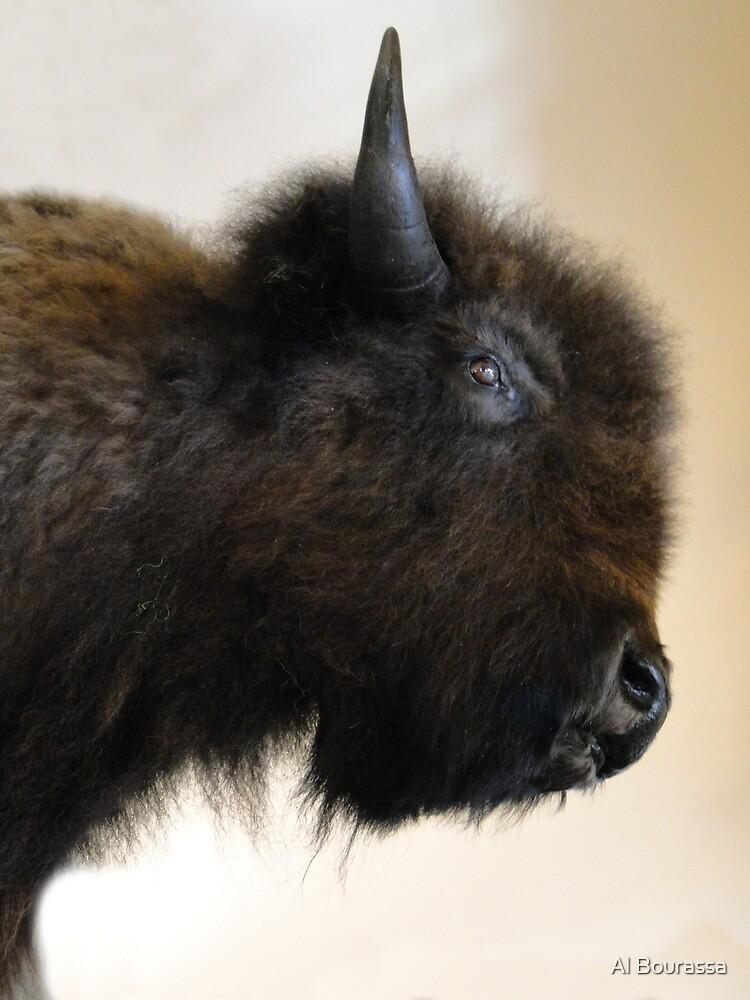 Prairie Bison by Al Bourassa