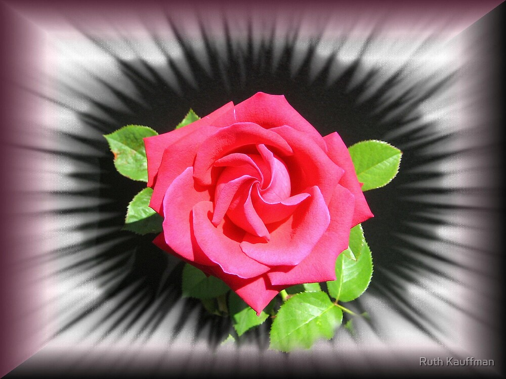 """""""The Rose"""" by Ruth Kauffman"""
