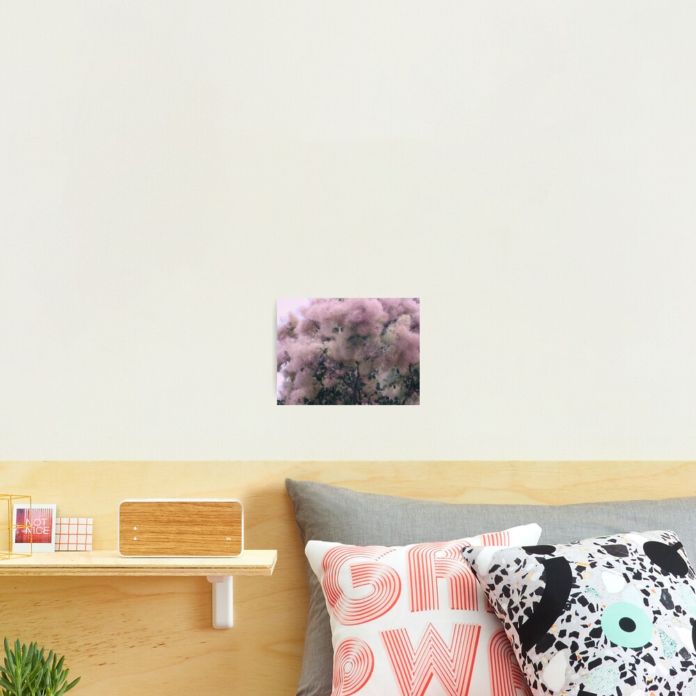 Pink Velvet  Photographic Print
