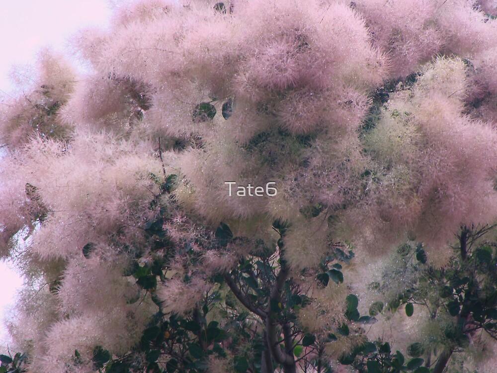 Pink Velvet  by Tate6