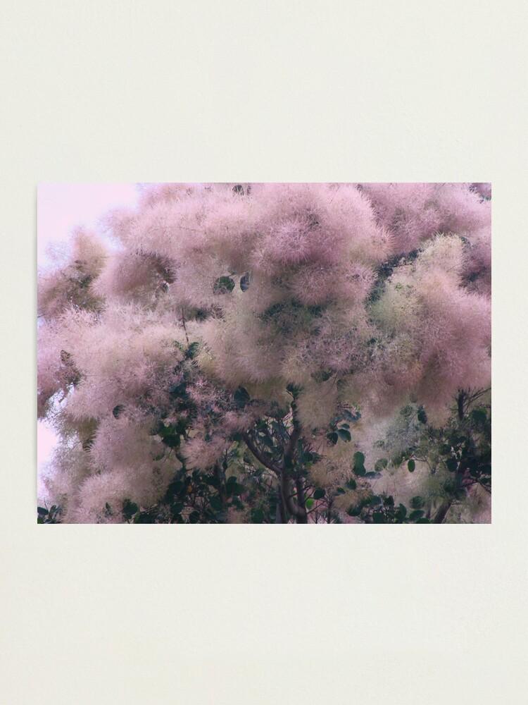 Alternate view of Pink Velvet  Photographic Print
