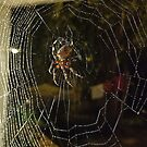 The Web by Grinch/R. Pross
