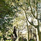 THE FEVER TREE - Acacia xanthophloea by Magriet Meintjes