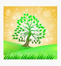 Summer Green Tree Photographic Print