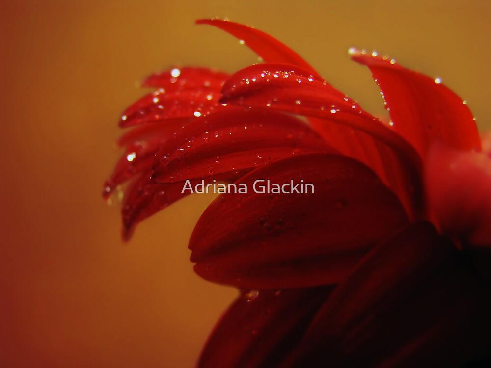 driven to tears by Adriana Glackin