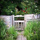 the garden by NordicBlackbird
