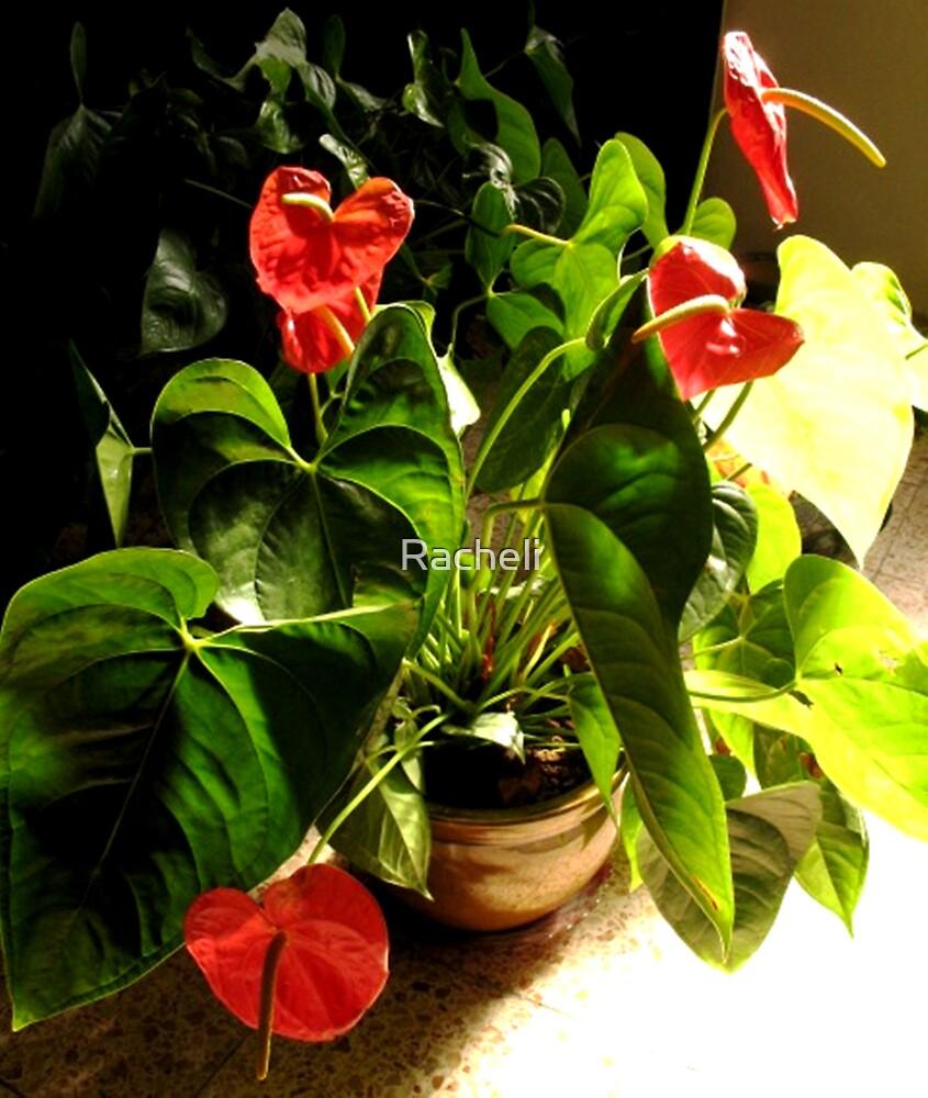 Efflorescency by Racheli
