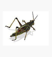 Florida Grasshopper Photo Photographic Print