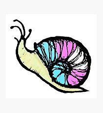 Transgender Pride Snail Photographic Print