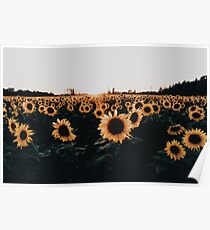 Sunflower Field 2015 Poster