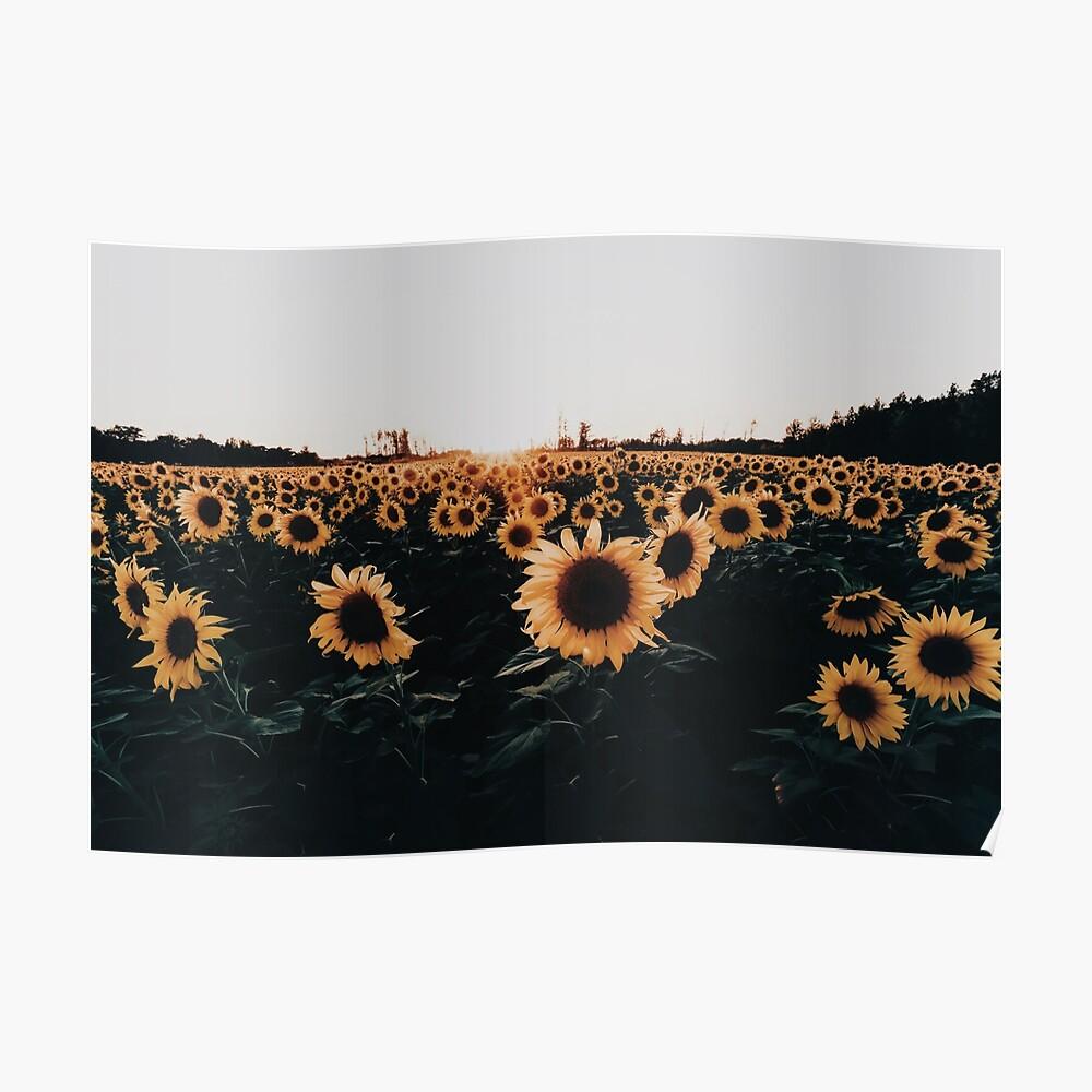 Sonnenblumenfeld 2015 Poster