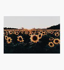 Sunflower Field 2015 Photographic Print