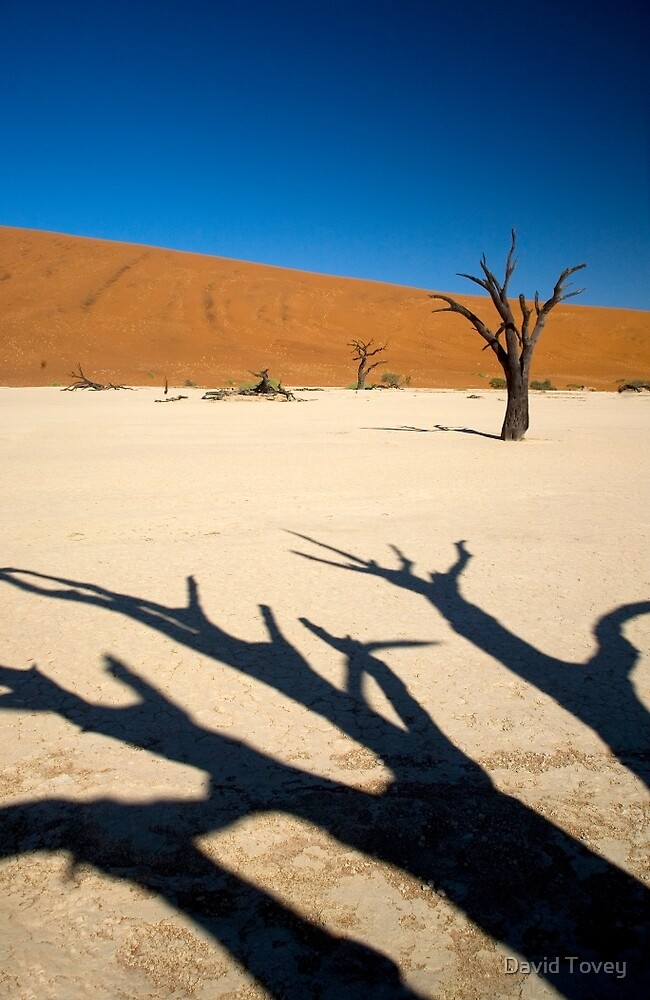 Dead Vlei shadows of thorn trees by David Tovey