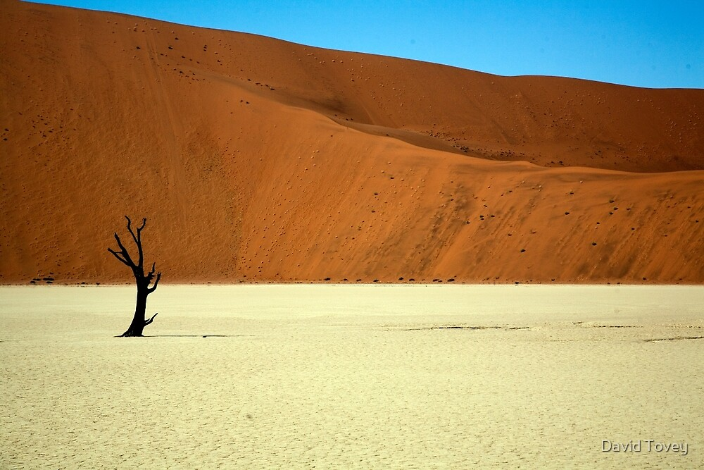 Dead Vlei lone camel thorn by David Tovey